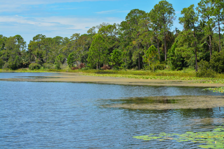A lake near a park in Pinellas County.